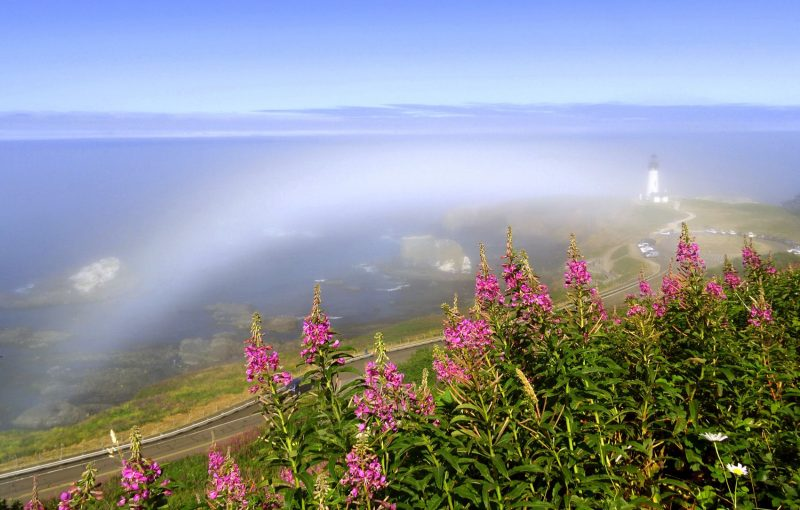 Fogbow over a shoreline, as seen from the perspective of a little hill, with pink flowers in the foreground and a distant lighthouse.